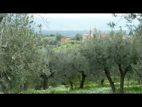 Olive Oil: How It's Made in Italy