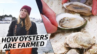 What It Takes to Farm 10,000 Oysters a Week in Freezing Temperatures — How to Make It