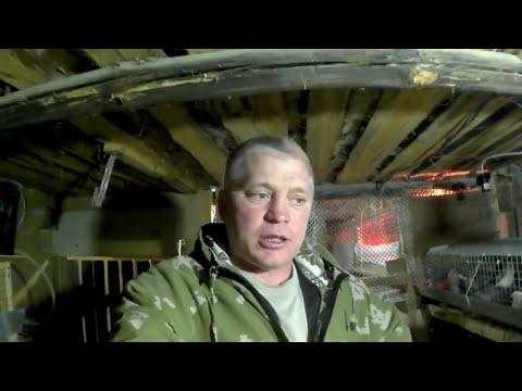 Первый выводок в инкубаторе БЛИЦ НОРМА -72 // Жизнь в деревне
