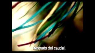 Caudal Lyrics Video, Constantin
