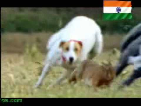 Dog Vs Rabbit Funny