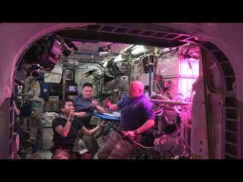 Prueban la primera lechuga cultivada en el espacio