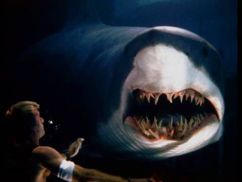 Great White Shark Accident ★★★★★ Video