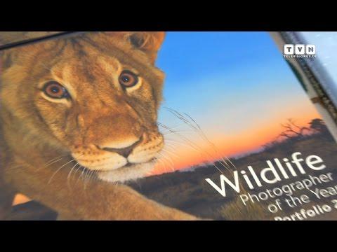 Wildlife Photographer of the Year - In mostra un'inedita natura mozzafiato