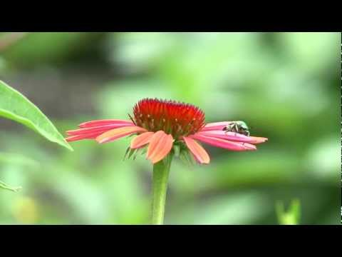 Pollinators and Beneficial Insects
