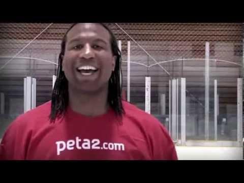 Sexy VEGAN Winter Olympics Athletes Sochi 2014 Hockey Highlight NHL USA Russia Oishe Ski Weir White