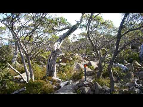Mt Wellington Pinnacle to Ferntree Walk