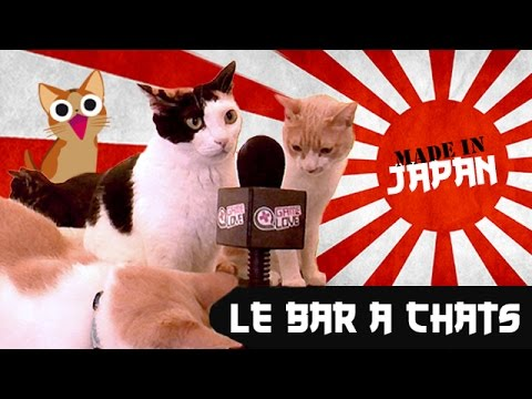 MADE IN JAPAN # 1 : Les Bars à Chats