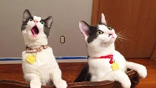Funny Cats Reaction (Part 1) 😹 [Funny Pets]