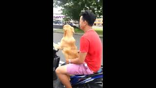 Dog riding moto scooter
