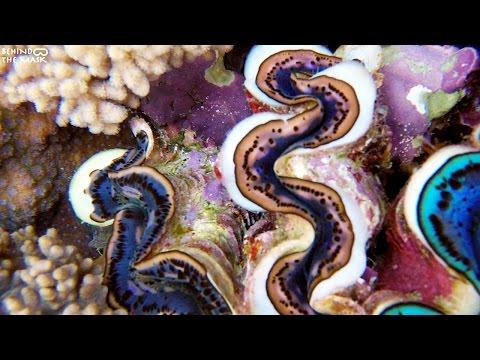 Maxima clam with Go Pro (Dahab - South Sinai - Egypt)