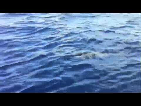 Andiamo's 1st Marlin