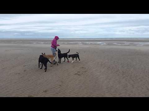 Dog walking blackpool - Alpha Pet Care