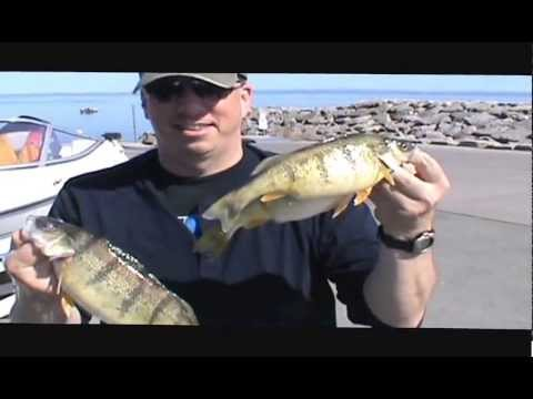 Jumbo Yellow Perch Fishing Lake Erie, May 1, 2013