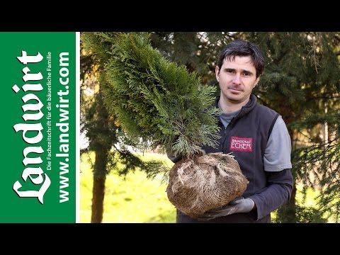 Bäume Und Sträucher Pflanzen | Landwirt.com