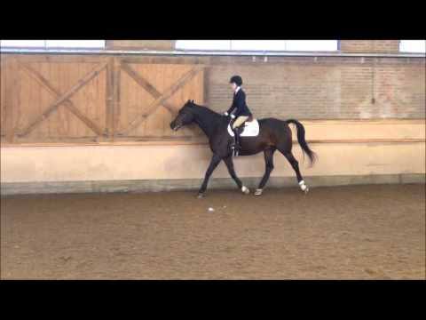 1/5 Ethel Walker School IEA Show Varsity Intermediate || 9/27/2014 - 09/28/2014
