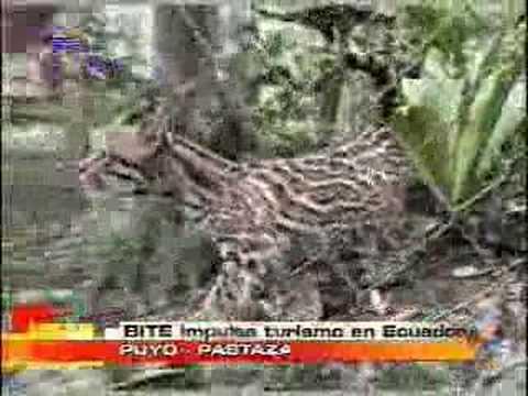 BITE Impulsa turismo en Ecuador