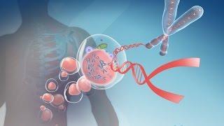 Какой длины ДНК человека?