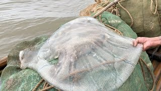 GIANT JELLYFISH Catch and Cook - Vietnam Street Food - Vietnam Seafood