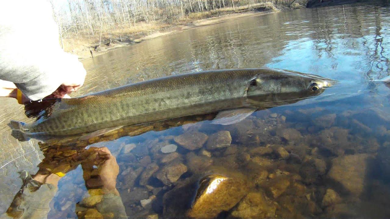 Kinkaid muskie youtube for Kinkaid lake fishing report