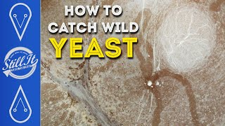 Catch Your Own Wild Yeast - With A Pro Brewer