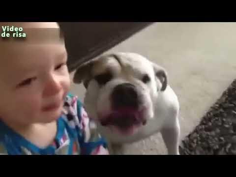 Perros Monos Besar Bebés - Perros divertidos dando Bebés Besos Compilación 2014 [NEW VIDEO]