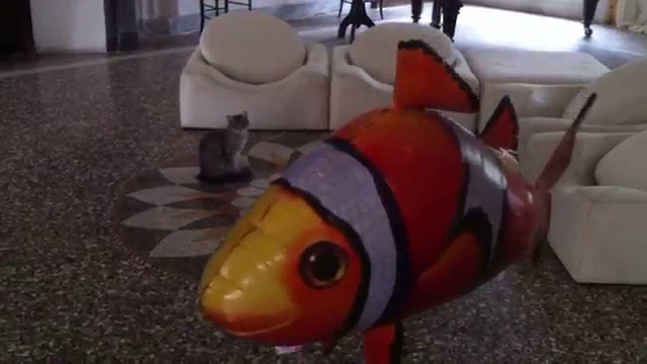 Air swimmers clown fish playing with a cat in a chateau for Air swimming fish