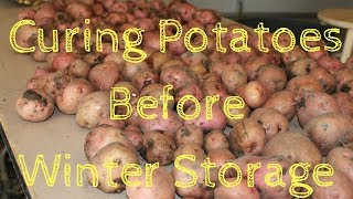 Curing Potatoes before winter storage