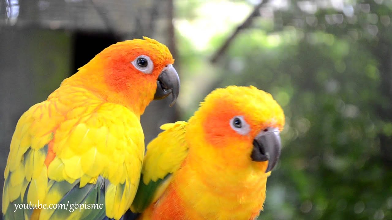 Birds - HD - YouTube