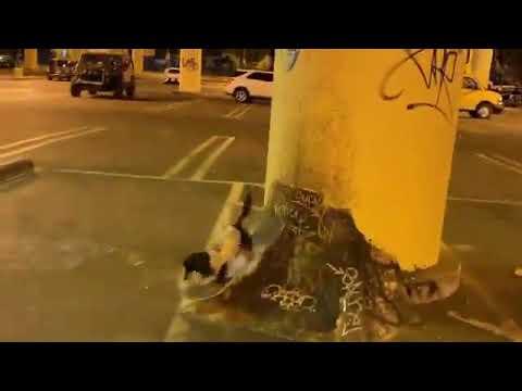 Stay Rowdy ♥️ @rowdy_dachshund | Shralpin Skateboarding
