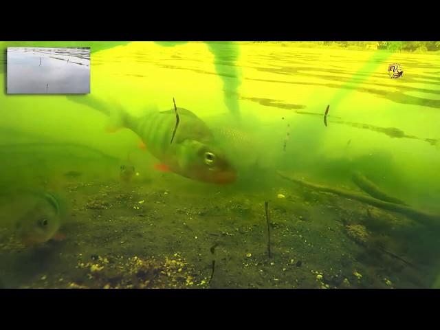 подводный поплавок рыбалка