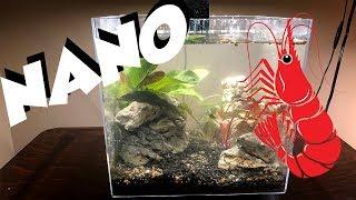 3 Gallon Shrimp Tank!