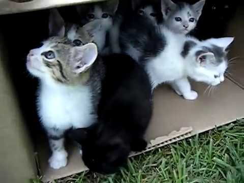 10 Kittens 1st day outside!