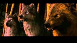 pelea entre lobos y cullen