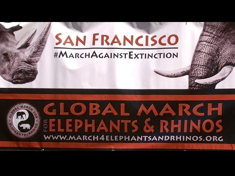 GLOBAL MARCH FOR ELEPHANTS & RHINOS SF - Musical Medicine with Soleil DakotaAL3