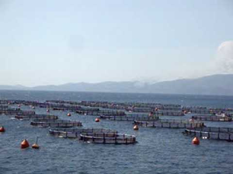 Fish farm on Evia across the projected landfill - Fire across the sea in Grammatiko