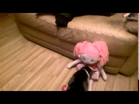 One Direction The Cat Pussy Licking Princess video