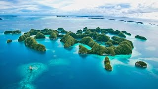 Dive Palau, This is How You Should Do It!
