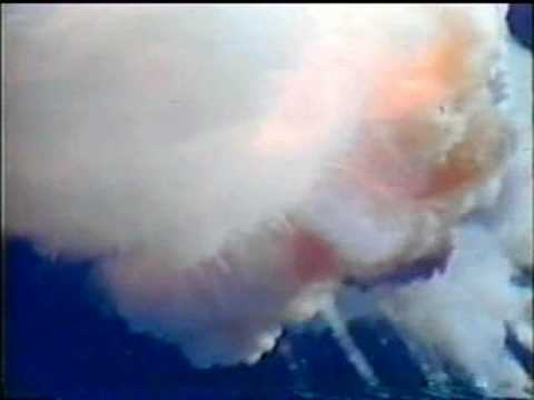 CBS News Live Coverage of The Challenger Disaster Part 1