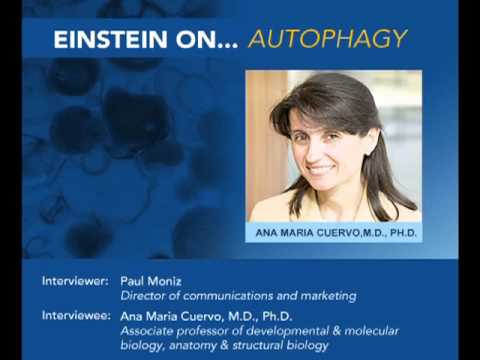 Einstein On: Autophagy, Dr. Ana Maria Cuervo