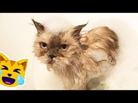 La Reacción de mi GATO al Bañarse 😂