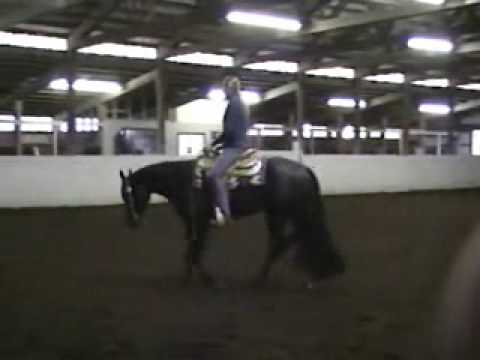 Dark Art - 2006 Appaloosa Gelding For Sale $10000 Great All-Around Great Black color