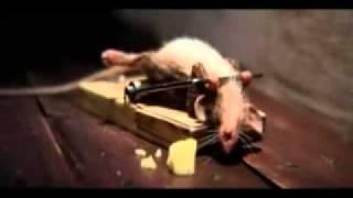 Lustige MausWerbespot