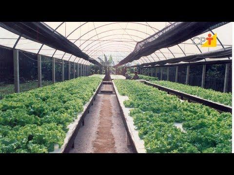 Clique e veja o vídeo Curso a Distância Hidroponia - O Cultivo sem Solo