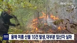 올여름 산불 절반 조림지가꾸기 사업 중 발생