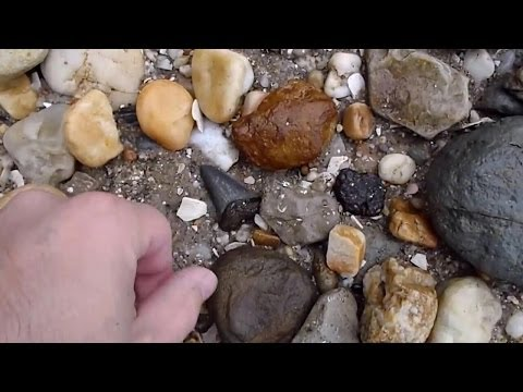 Fossil Hunting around the Chesapeake Bay Area - Fossil Bones and Shark Teeth