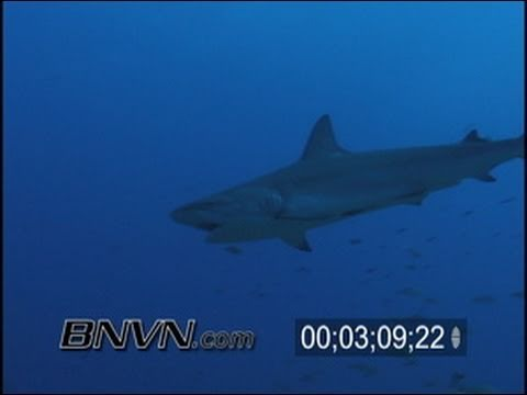 12/8/2001 West Palm Beach Florida Shark Dive Video
