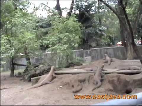 Kebun Binatang Surabaya - East Java