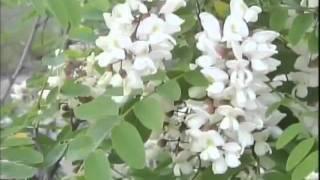 Árboles y arbustos en xerojardinería - Josemanuel Fernández (Leoplant)