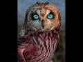 OWLS   Owl Documentary (HD) Amazing Film, Harry Potter Birds (Earth Documentaries)